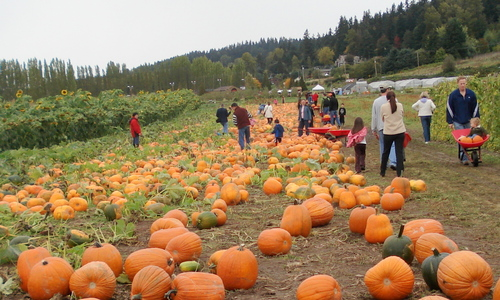 Pumpkin%20patch%20at%20South%2047%20Farm.JPG