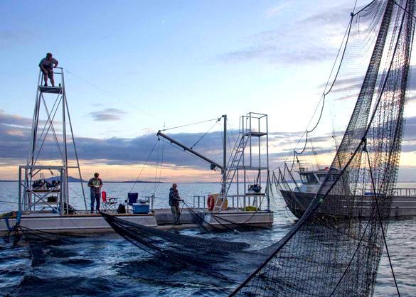 Reefnet Fishing.jpg