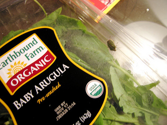Stinkbug%20in%20arugula.jpg