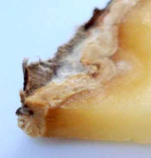 Cheese rind closeup.JPG