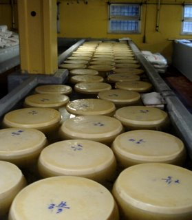 Cheese wheels in brine.JPG