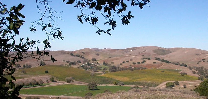 Santa Ynez vineyards 2.jpg