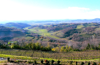 Collio vineyards.JPG