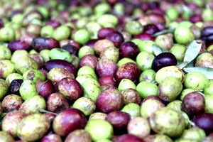 Olives closeup.JPG