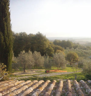 olive_orchard_view.jpg