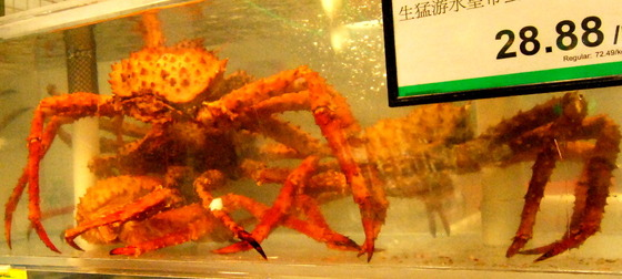 Crab at Asian market.JPG