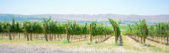 Vineyards on Rd Mtn.jpg