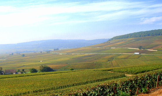 Vineyards of Corton.JPG